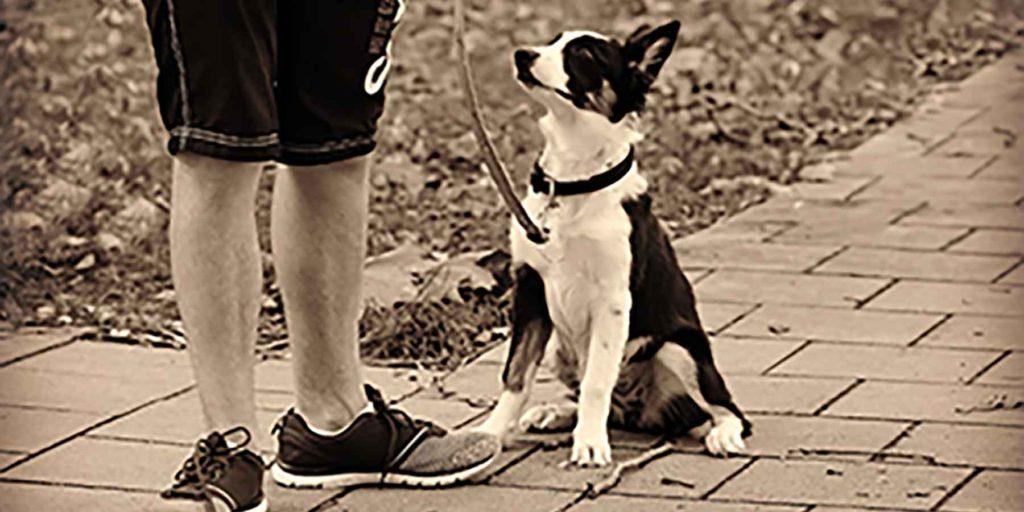 ペットの散歩中でも活用できる「トイレ情報共有マップくん」