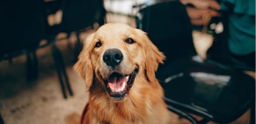 愛犬と一緒に入れる温泉が見つかる「温泉情報共有マップ」くん