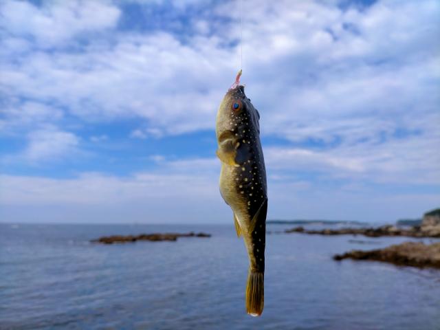 秋に狙える魚特集!9月10月11月の初心者にもおすすめな釣り方をご紹介